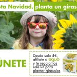Si te levantas cada día buscando el sol y un futuro positivo y luminoso, planta un girasol