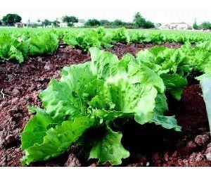 Debemos apostar por la agricultura ecológica en el Día mundial de la alimentación