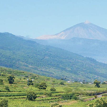 EQUO-Tenerife hace sus alegaciones políticas sobre la nueva subestación eléctrica en la comarca de Acentejo